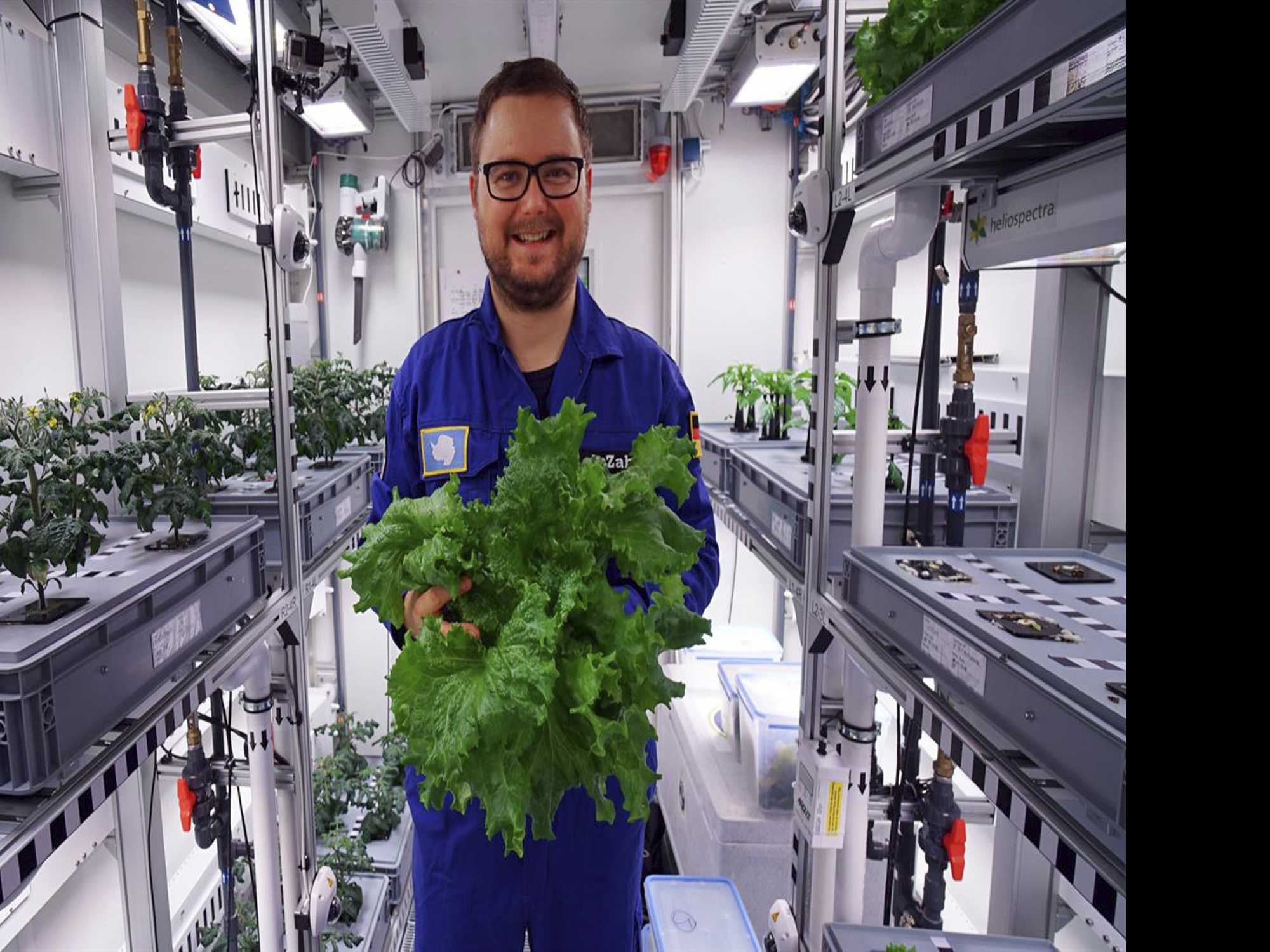 Scientists Harvest First Vegetables in Antarctic Greenhouse
