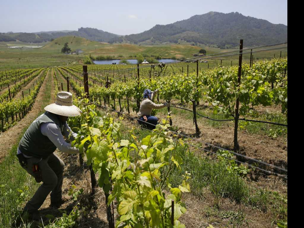 How the World's Wine Industry is Adapting to Climate Change