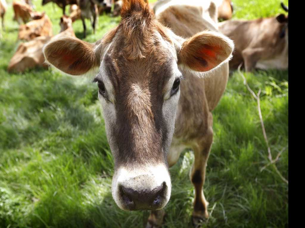 Organic Dairy Farmers Vow to Compete in Changing Industry
