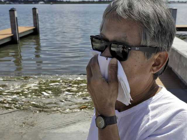 Devastating Toxic Algae Bloom Plagues Florida's Gulf Coast