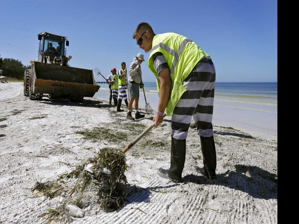 Toxic Algae Bloom Plagues Florida's Gulf Coast
