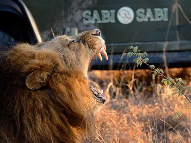 Into the Wild: Sabi Sabi Private Game Reserve