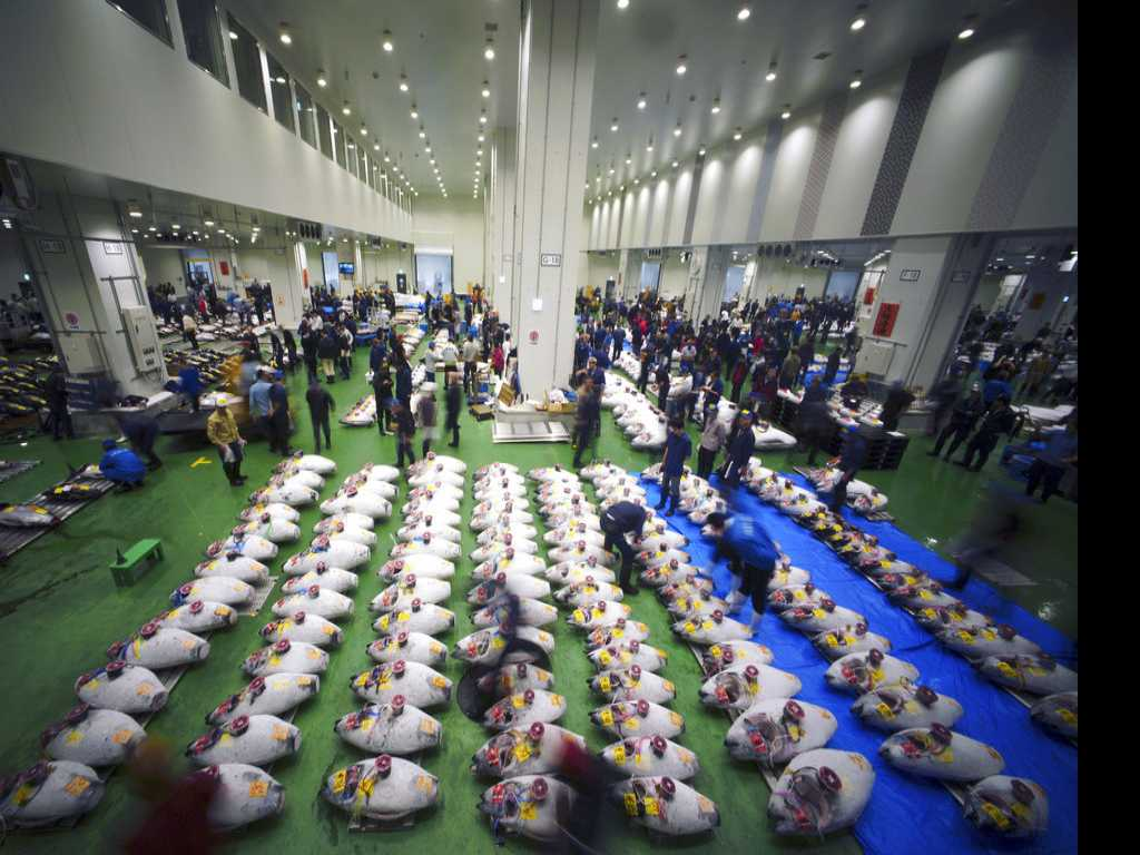 New Tokyo Fish Market Starts Traditionally with Tuna Auction