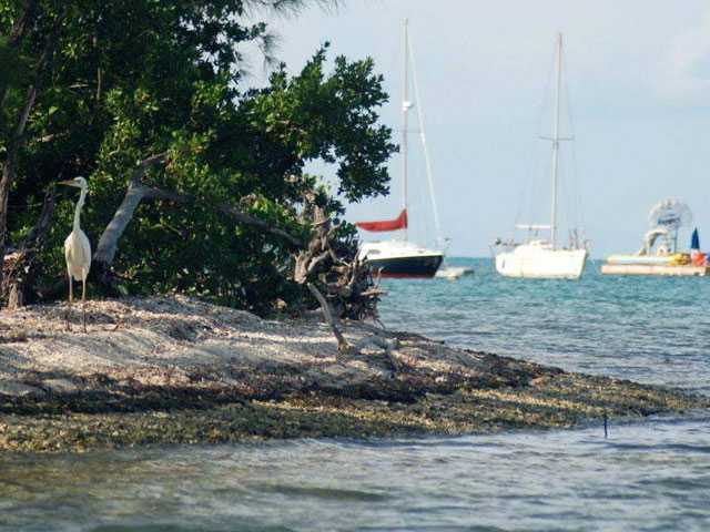Reports: Speedo Sparks Slur, Attack On Married Male Couple Near Key West