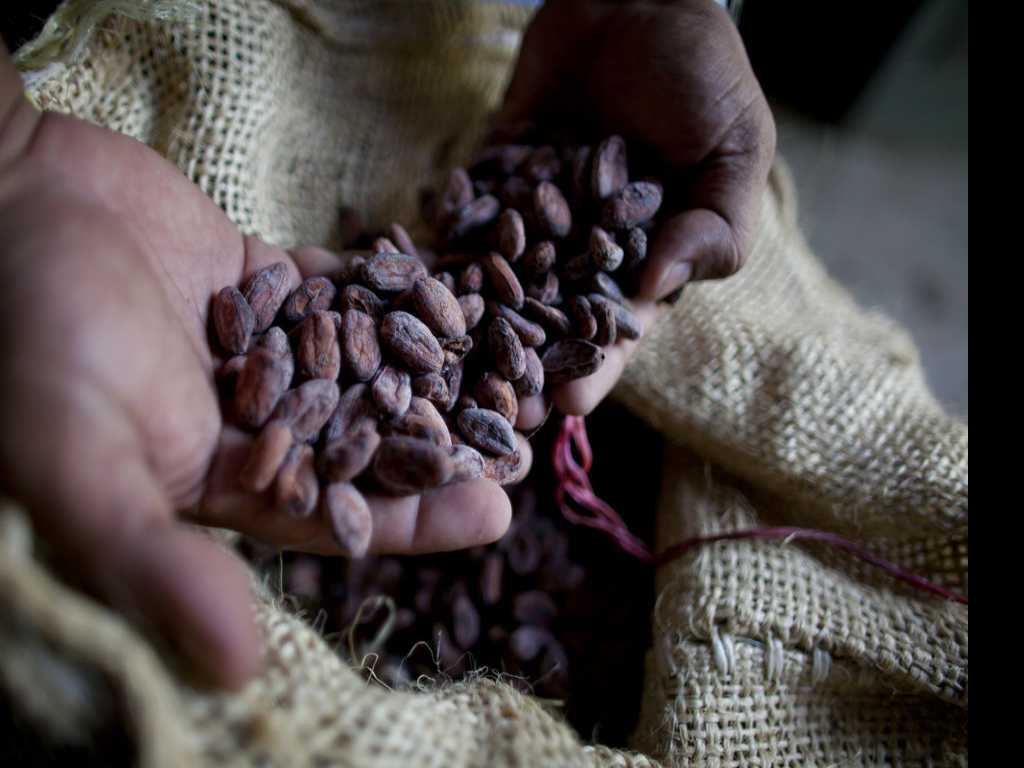 How Old is Cacao? New Research Pushes Back Date