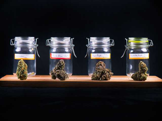 Michigan Voters Bring Legal Recreational Pot to the Midwest