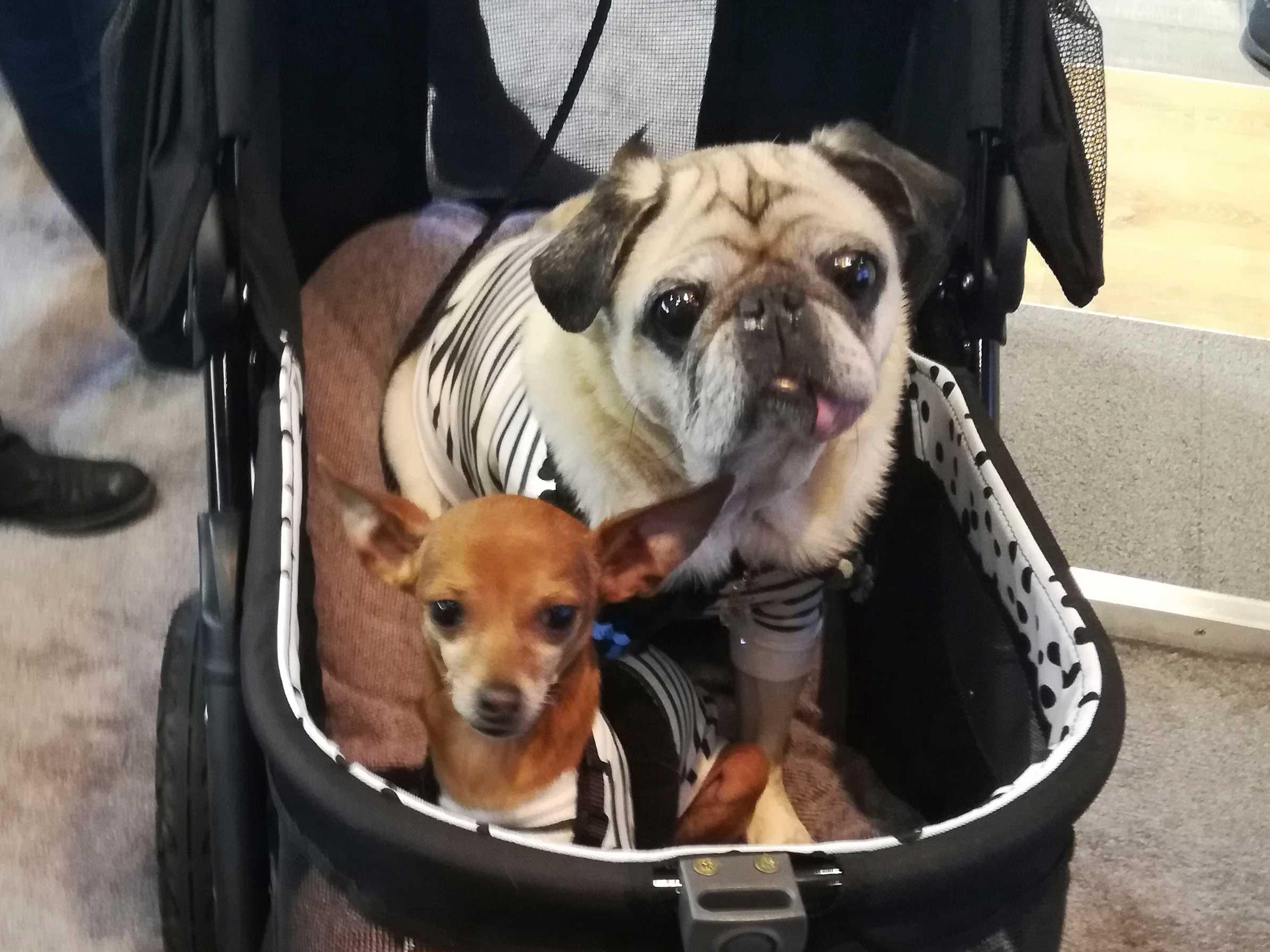 Pet Lovers Meet Pet Stars at Manhattan's PetCon