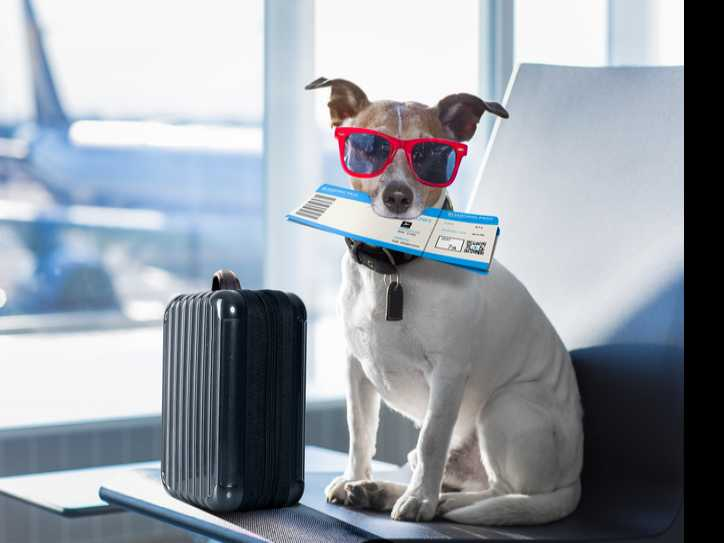 The Ups and Downs of Flying with Emotional Support Animals