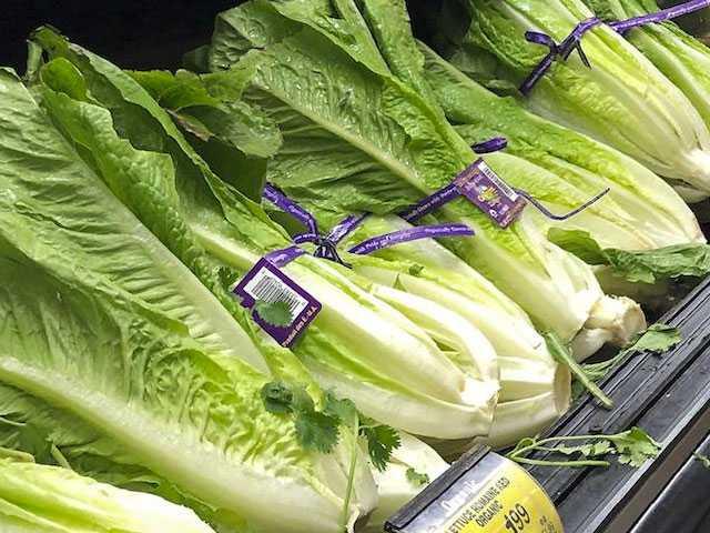 Romaine Frenzy Amid E. coli Outbreak