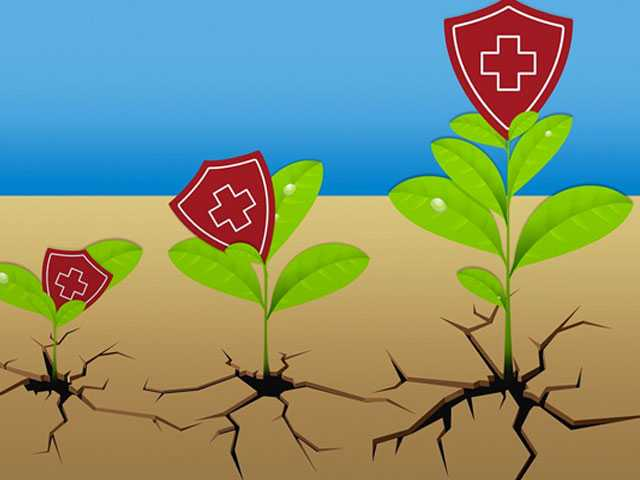 In Health Insurance Wastelands, Rosier Options Crop Up for 2019