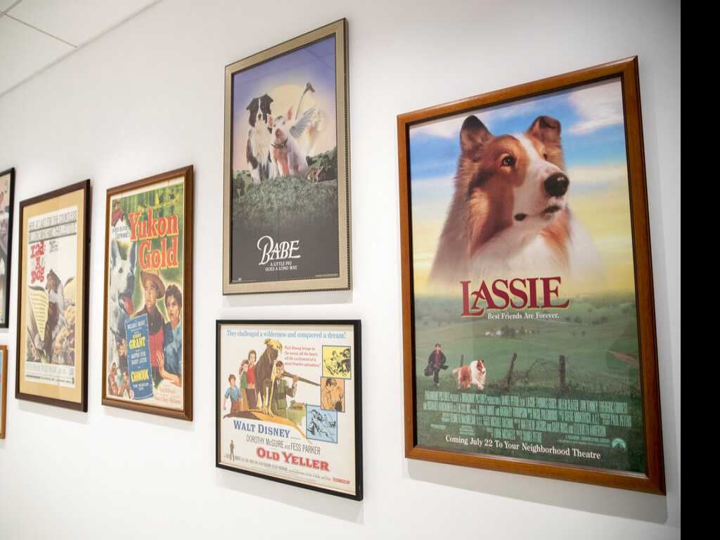 Woof! New York City Unleashes New Dog Museum