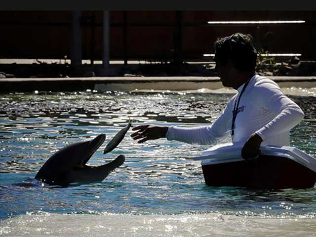 Arizona Facility Temporarily Closing After 4th Dolphin Death