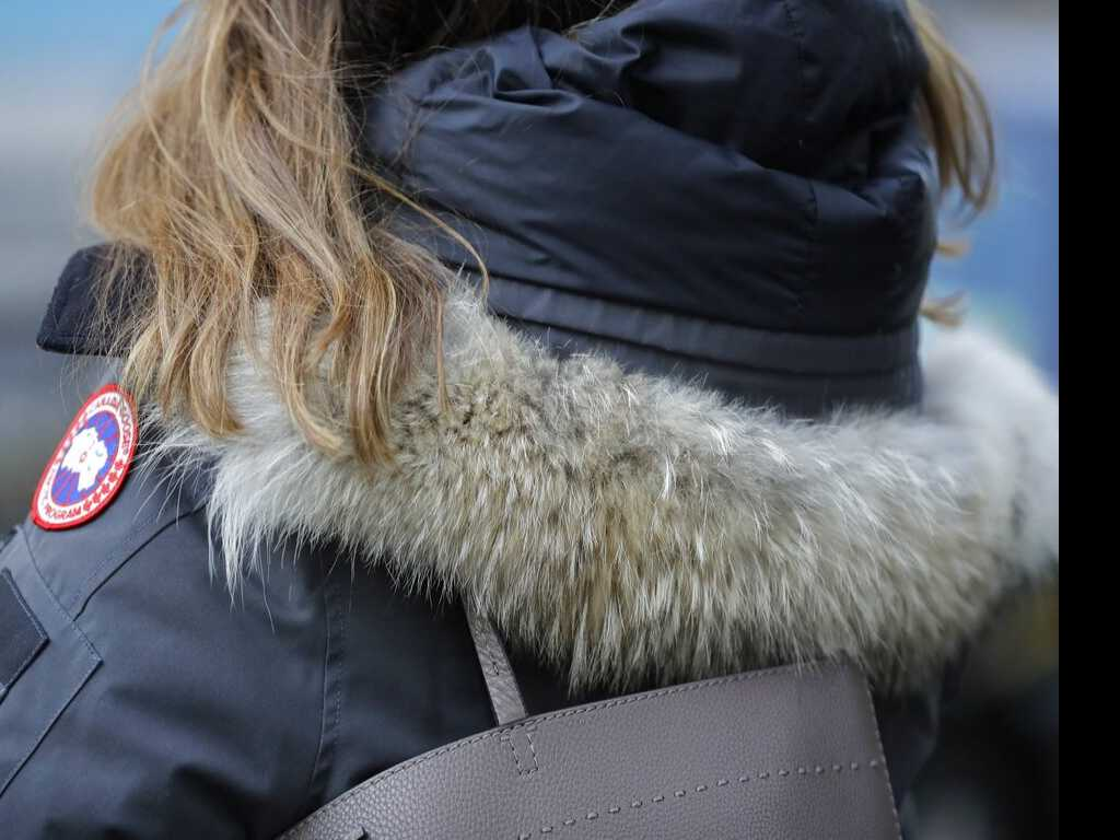 Coyote Fur in Demand Thanks to Popular Parkas