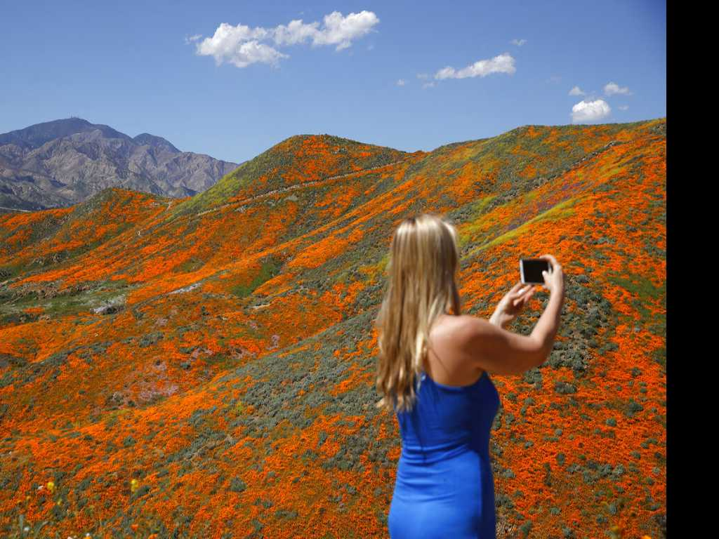 Thousands Converge on California 'Poppy Apocalypse'