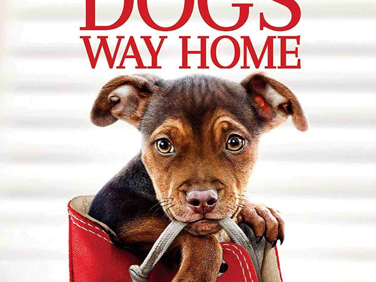 Review :: A Dog's Way Home