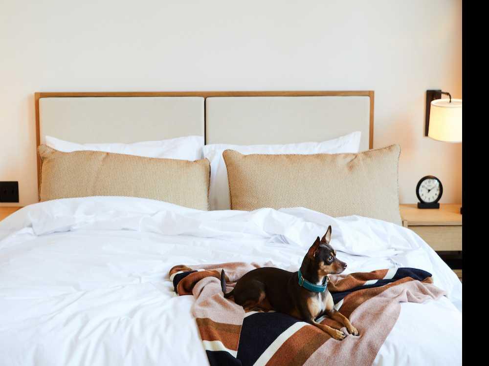 3 Pawsome Pet-Friendly Hotels
