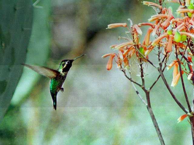 Celeb or Stranger? Study Weighs Americans' Interest in Birds