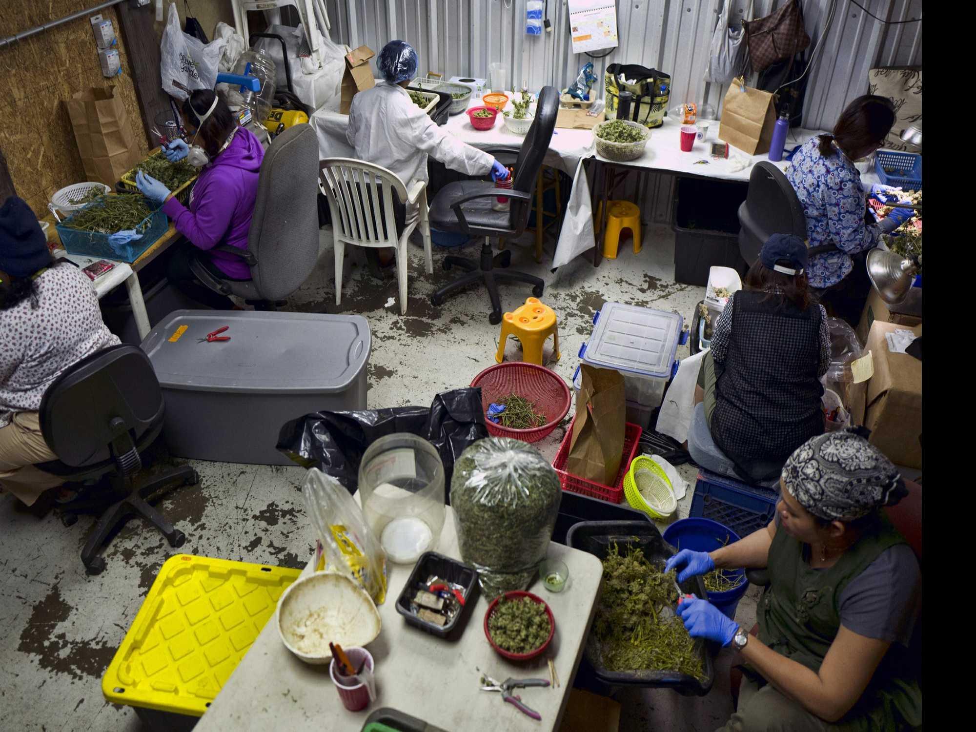 U.S. Authorities: Marijuana Involvement Imperils Citizenship