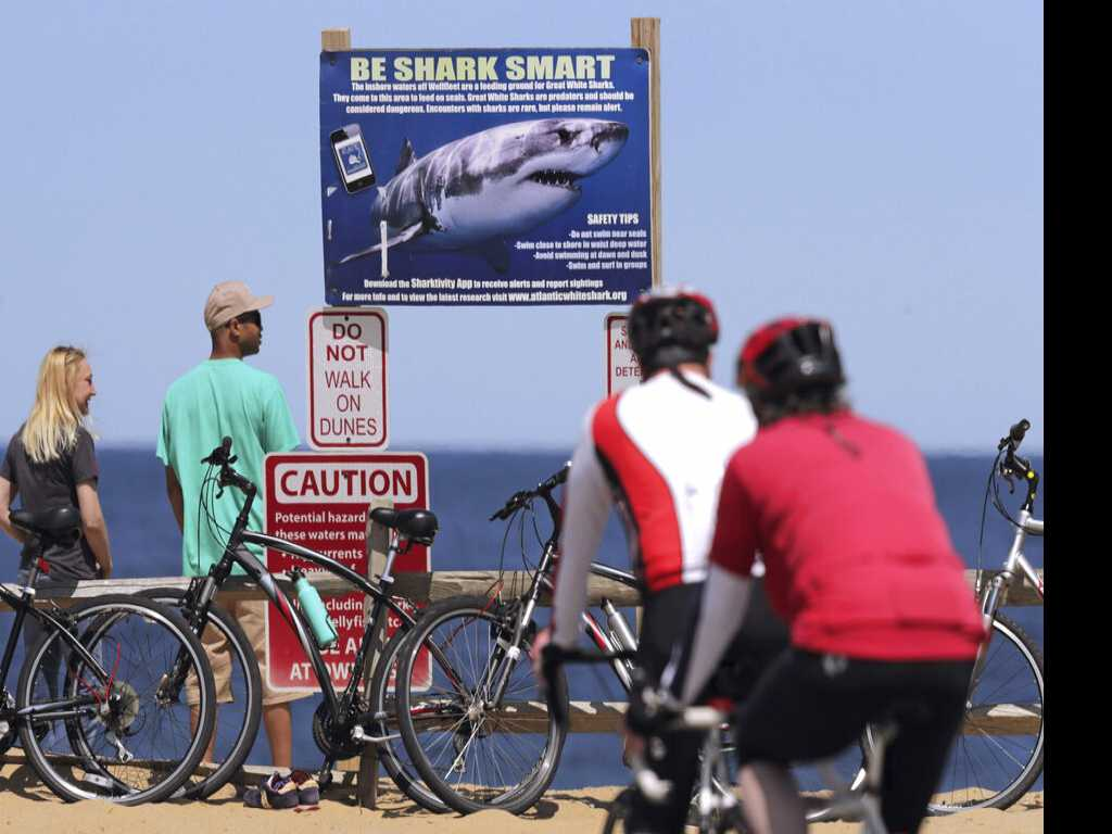 After Shark Attacks, is Cape Cod Ready for Tourists?