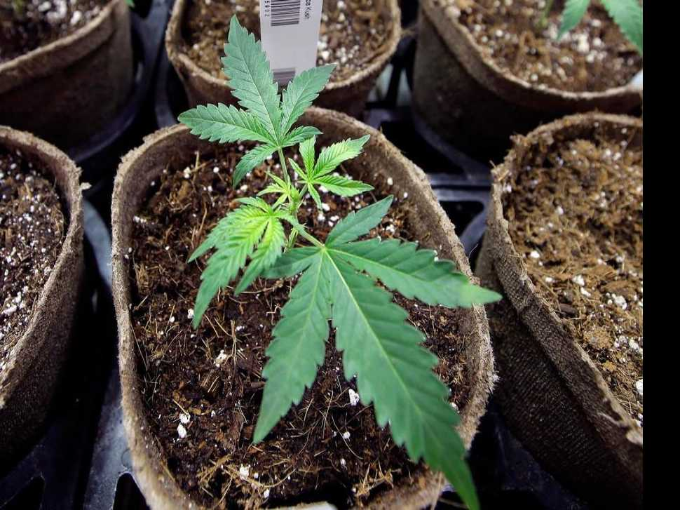 Authorities Raid 247 Colorado Homes Growing Black Market Pot