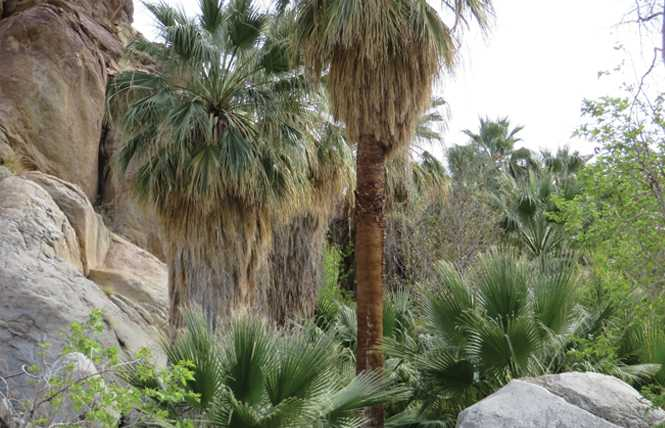 Take a quick visit to Palm Springs before summer