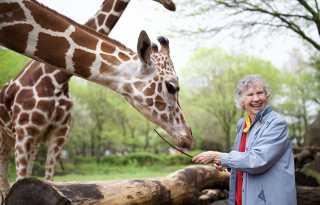 Giraffe whisperer studies in the wild
