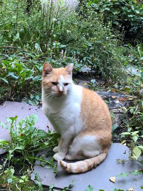 OBITUARY: Sarge Cat, suddenly of unknown cause